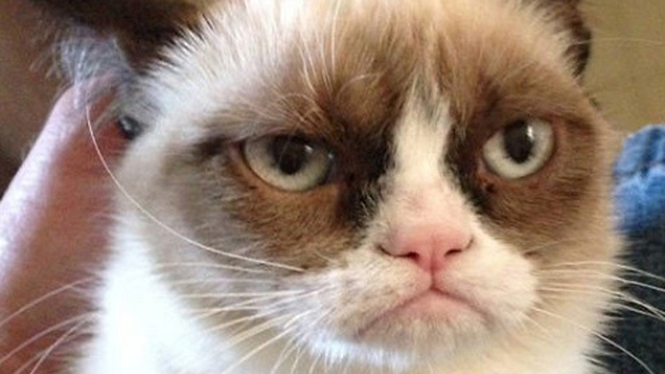 Grumpy cat is undoubtedly the Internet's most famous feline