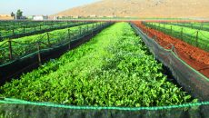 Lebanese Treasures Land produces 200 tons of snails a year (Greg Demarque | Executive)