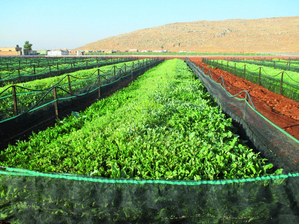 Farming for the future - Executive Magazine