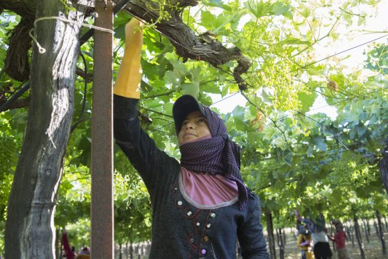 2016 world day against child labour-7