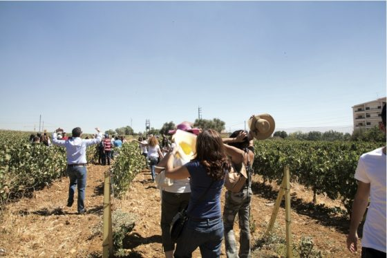 Wine tourism is more popular with locals than with people from the Gulf (Photo: Greg Demarque)