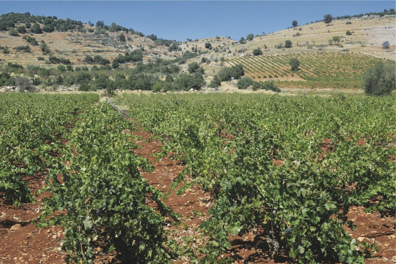 Profiling new Lebanese wines | Executive Magazine